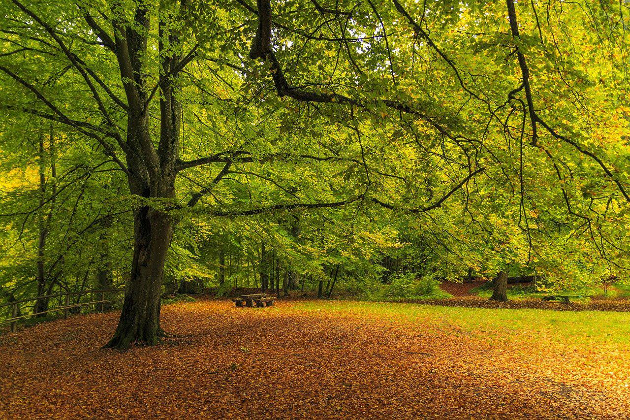 Landscaping Wokingham Berkshire Hampshire Surrey oak trees for the future