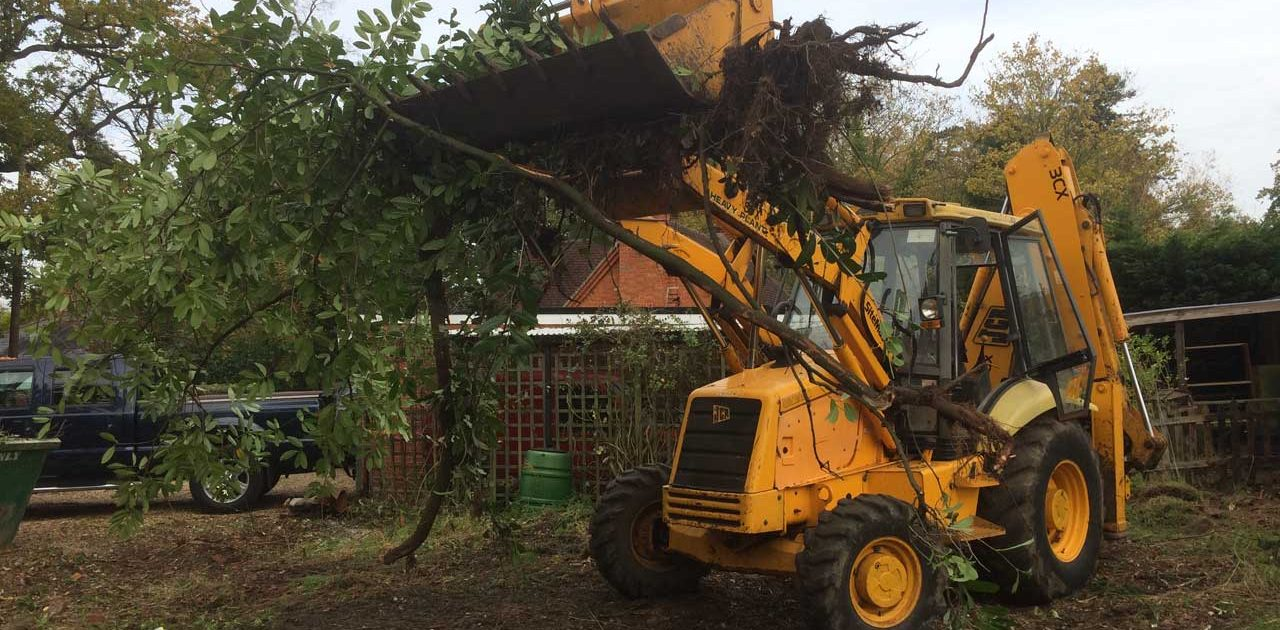 Image of a JCB clearing brush in Ascot, Berkshire - Land clearance in Ascot, Berkshire - land clearing by JCB in Ascot, Berkshire ready for seeding - Let the digger do it!