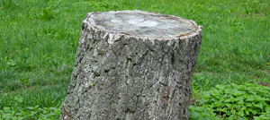 Tree stump removal in Berkshire, Hampshire and Surrey